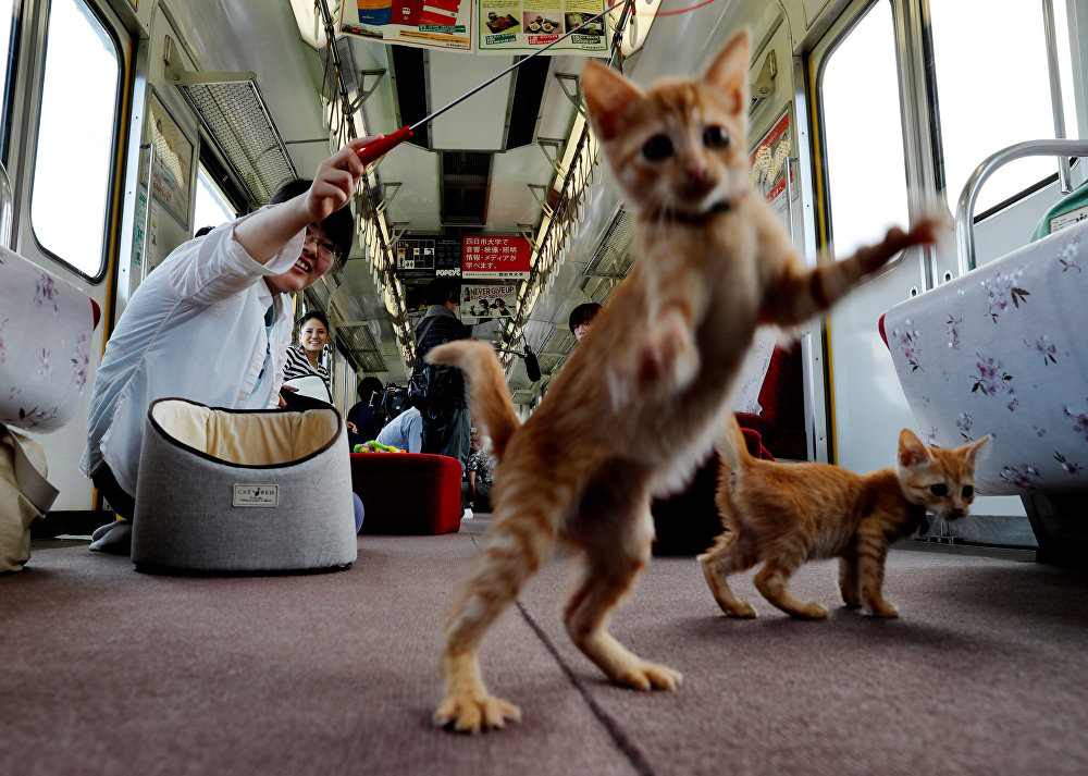 Cats on Tracks: A Ride Aboard the Japanese Feline Train Cafe