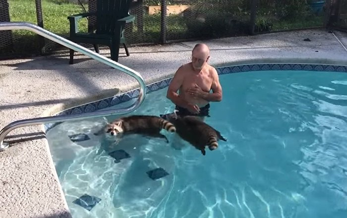 Better than swimming with the dolphins; swimming with the raccoons!