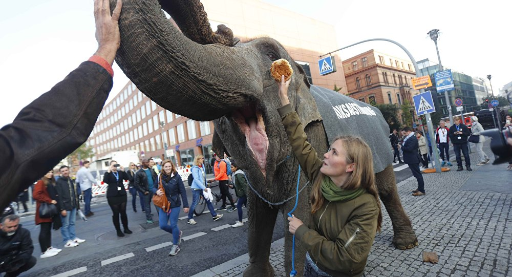 Activists protest with an elephant for plebiscites in Berlin, Germany, September 24, 2017