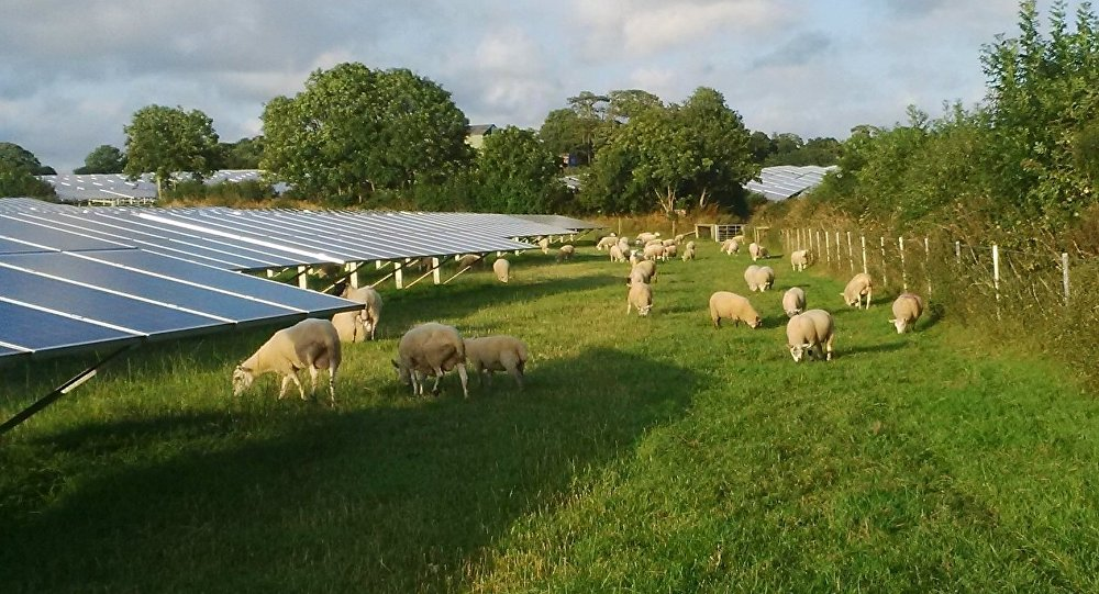 Solar farm with sheep grazing, Pembrokeshire