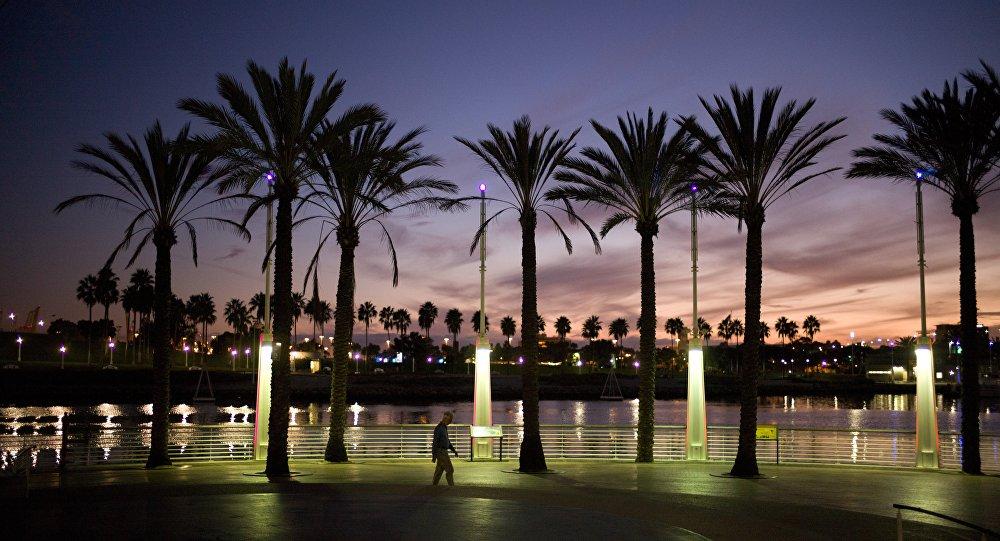 Palm Trees California
