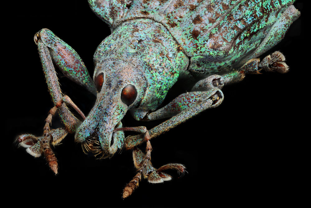 Nikon's Small World: Best Microscope Photos of 2017