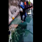 Tourist Panics on China's Glass-Cracking Bridge