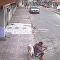 Hold Still: Brazilian Pooch's Human Hydrant