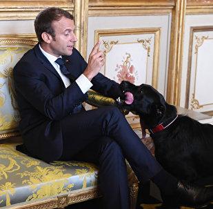 French president Emmanuel Macron gestures towards his dog Nemo (File)