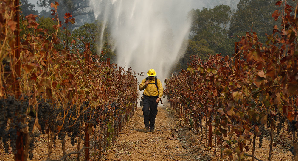 Firefighter Chris Oliver walks between grapevines as a helicopter drops water over a wildfire burning near a winery Saturday, Oct. 14, 2017, in Santa Rosa, Calif.