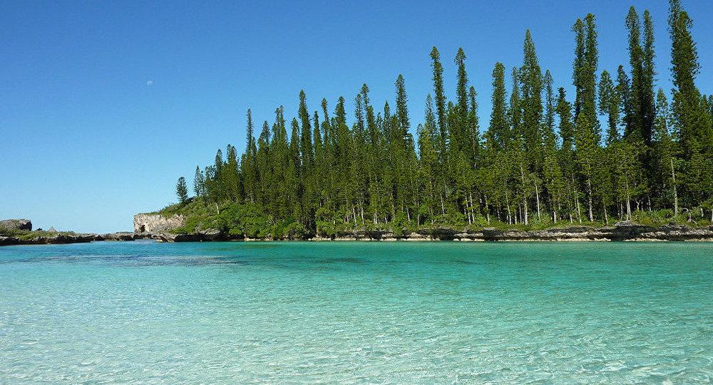 Araucaria columnaris New Caledonia