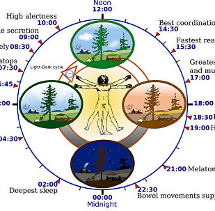 Some features of the human circadian (24-hour) biological clock