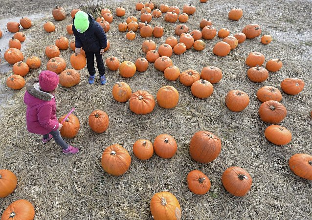 Children walk between pumpkins