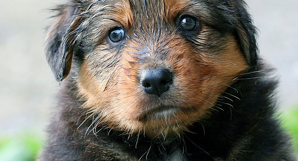 Indian Police Arrest Two Women For Killing Over A Dozen Puppies