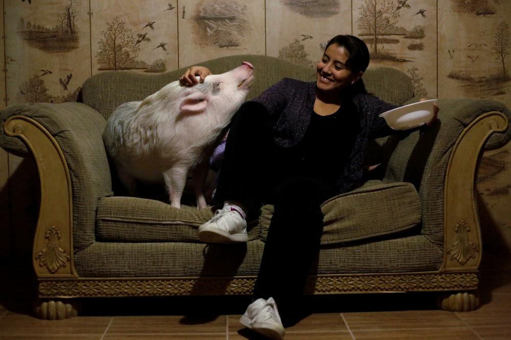 Yissel Mendoza и ее свинья по кличке Balu у себя дома в городе Сьюдад-Хуарес, Мексика