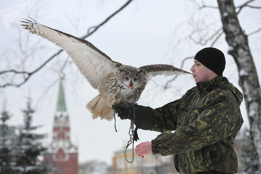 Defending the Kremlin: Hawks, Falcons and Owls in Service