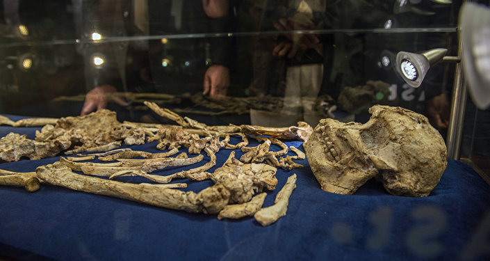 The Little Foot fossilised hominid skeleton is unveiled for the first time to the public at the University of the Witwatersrand in Johannesburg on December 6, 2017