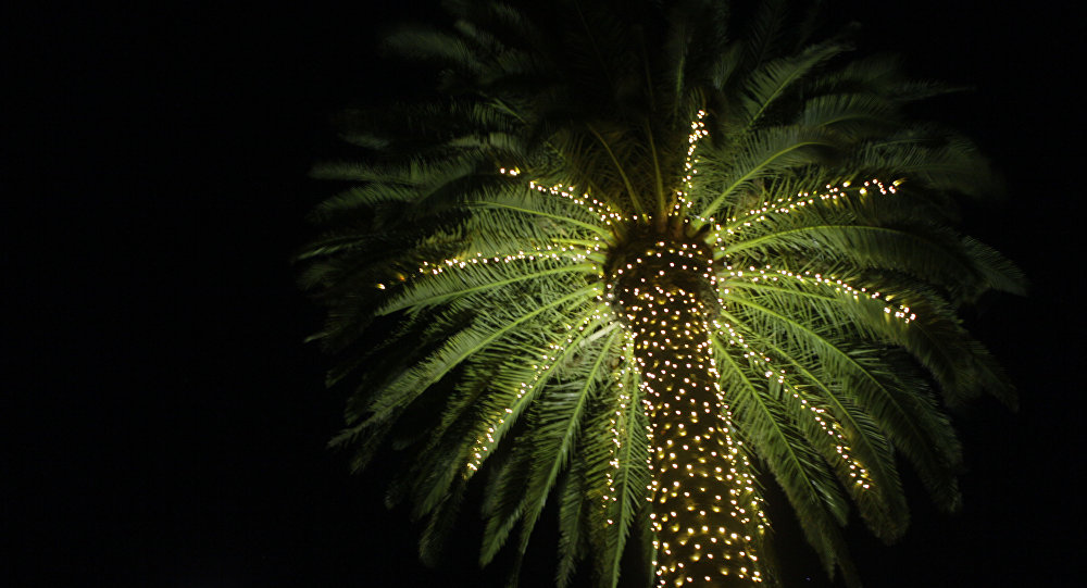 In this photo taken Wednesday Nov. 30, 2011, a palm tree is illuminated with lights at the entrance to St. Supery Vineyards and Winery in Rutherford, Calif.