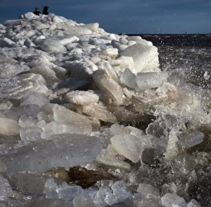 Shore of the Gulf of Finland. File photo