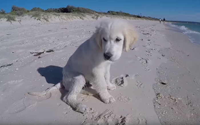 Beach Blunder: Pup's Creation Crushed by the Ocean