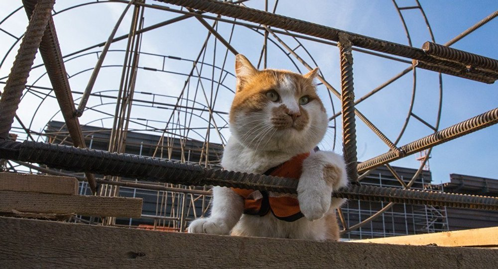 Mostik the cat