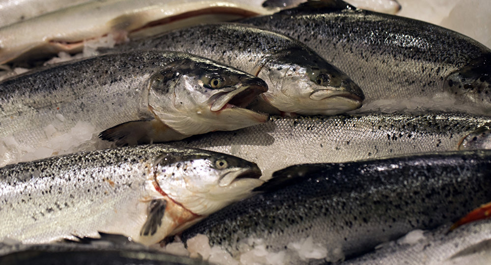 Norway's farmed salmons are displayed at a supermarket, on December 21, 2012 at the Kremlin-Bicetre, outside Paris