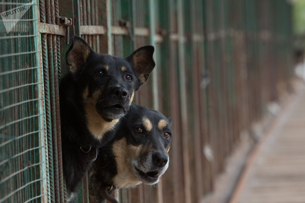 Dogs in an animal shelter, Moscow