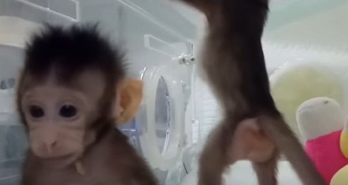 Chinese Scientists Have Successfully Cloned Monkeys