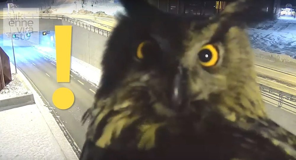 Watch Finland traffic camera captures curious owl staring into lens
