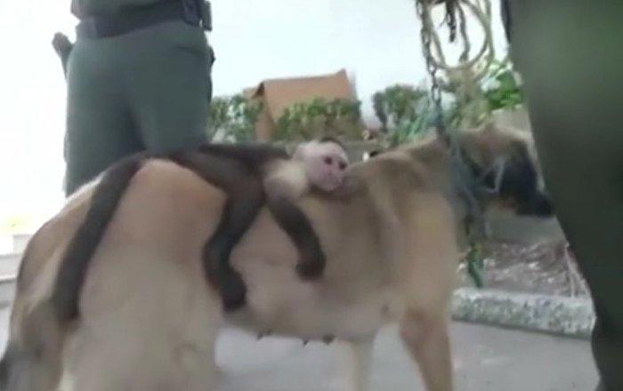 Dog adopts monkey