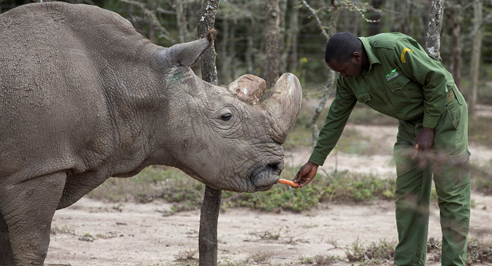 World's Last Male Northern White Rhino Dies Leaving Two Females