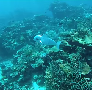 Researchers create SoFi, a robotic fish, to spy on marine life