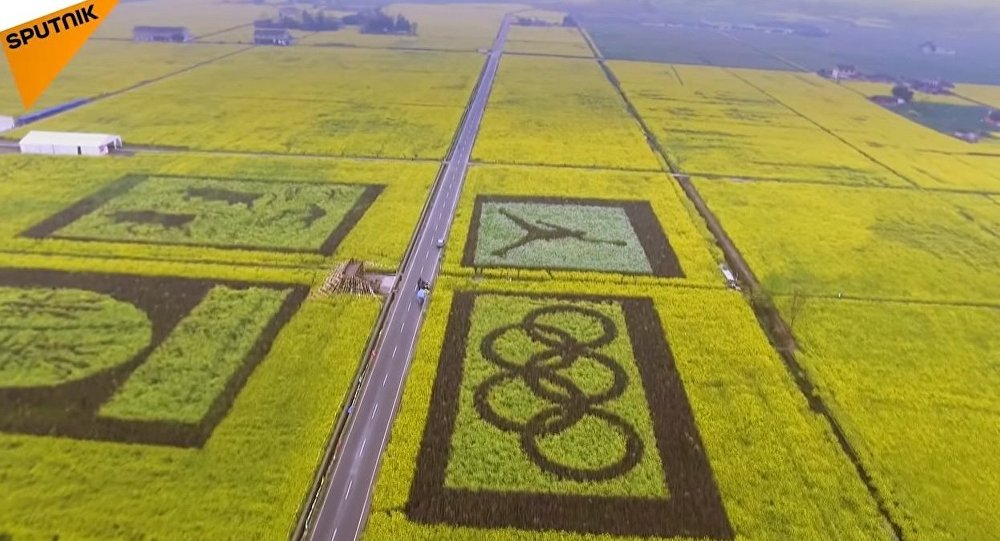 China: Enormous Rapeseed Fields Blossom In Sichuan Province