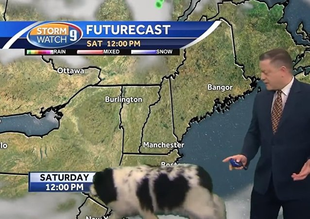 Dog interrupts Josh Judge's live forecast