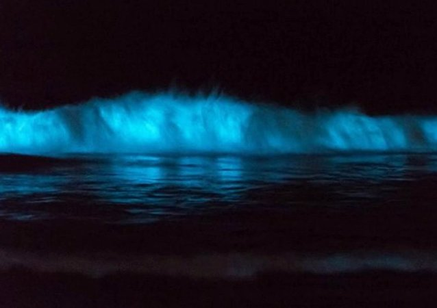 Why San Diego's tides are glowing blue
