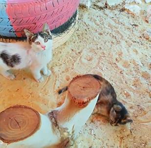 Syria: Kitten Sanctuary Opens in Aleppo