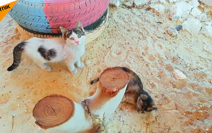 Syria: Kitten Sanctuary Opens in Aleppo