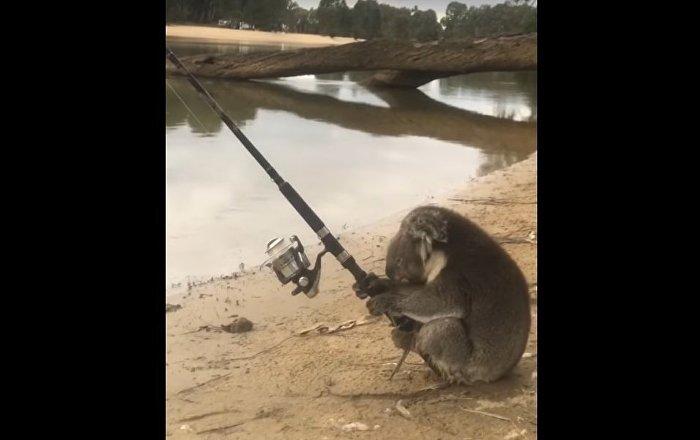 Koala Goes Fishing