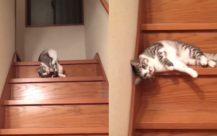 Apathetic Cat Takes Express Route Down Steps