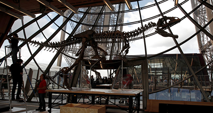 Workers reconstruct dinosaur fossil at the Eiffel tower, in Paris, France, June 2, 2018 ahead of its auction on Monday.