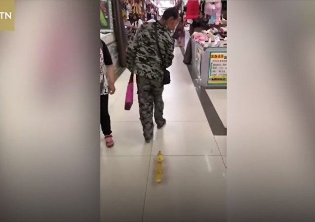 Man walks cute ducklings through shopping center