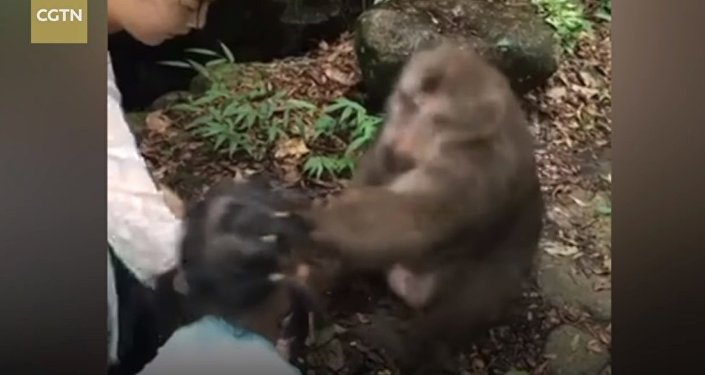 Little girl gets smacked on the face by angry monkey