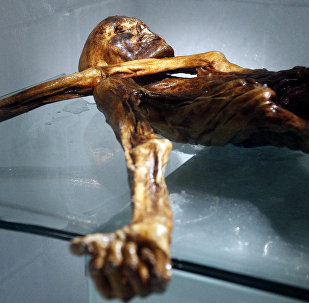 The mummy of an iceman named Otzi, discovered on 1991 in the Italian Schnal Valley glacier, is displayed at the Archaeological Museum of Bolzano on February 28, 2011