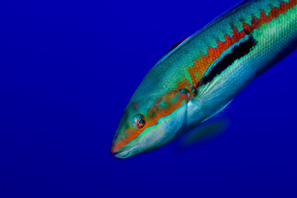 Spectacular Undersea Life of Lipari Island
