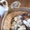 Help Meowt! Tardy Kittens Can't Fit in For Naptime