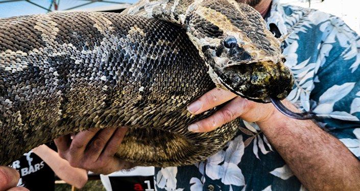 Man holding python
