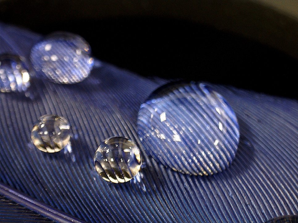 Water drops under increase in a stereomicroscope