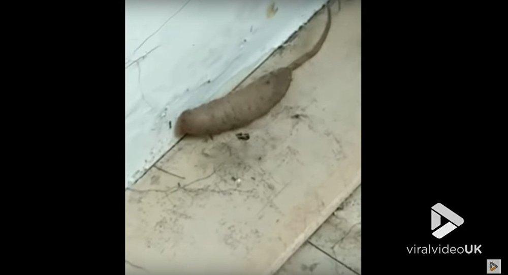Strange creature on porch
