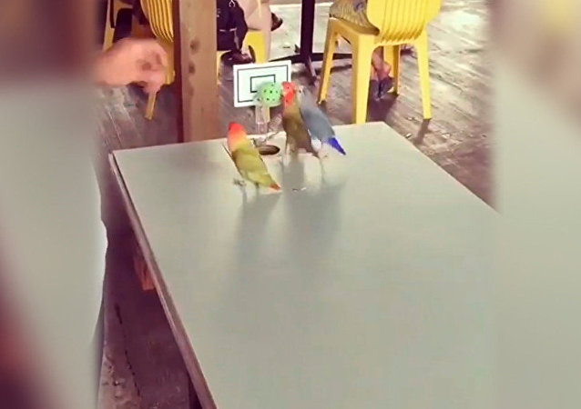 Parrots basketball players
