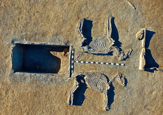 The nearby likeness of a chariot pulled by the two harnessed horses - believed to have been sacrificed for the burial - was also the grave of another similar couple, say archaeologists
