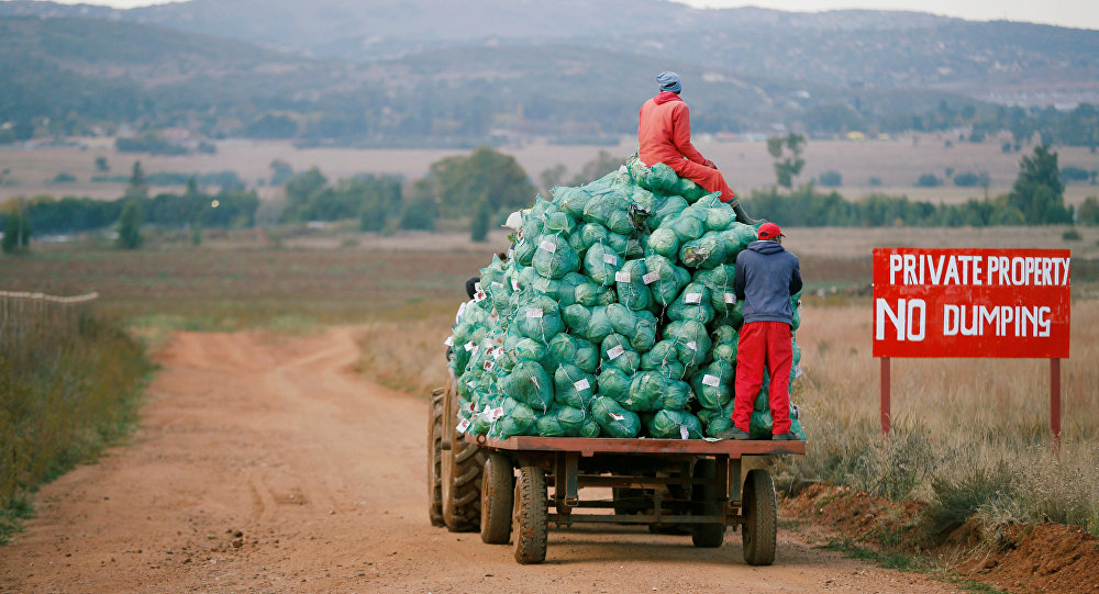 Farm workers harvest cabbages at a farm in Eikenhof, near Johannesburg, South Africa May 21, 2018