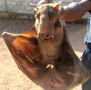 Terrific or Terrifying: These Are the Creatures You Could Face on Holidays