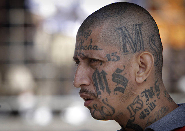 a gang member of MS-13