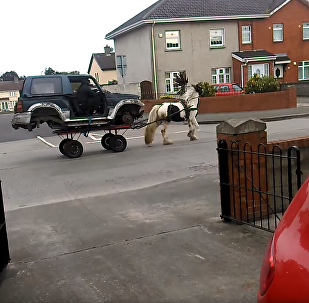 Pimp My Carriage? Reimagined Horse-Drawn Wagon Stuns Dublin Residents